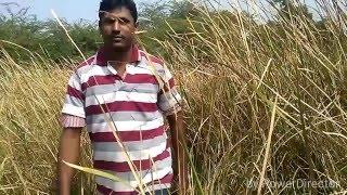 Jaago re jaago song spoof by IGK/ srimanthudu