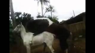 Horse Sex (3)