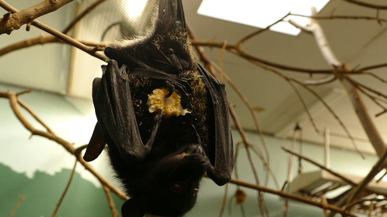 Meet And Greet Our Bats Youtube