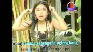 www stafaband co   Watu Cilik   Lagu dangdut - Stafaband