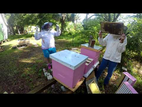 State inspection of my apiary