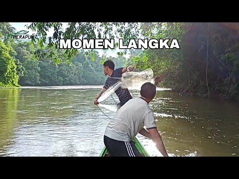 Download DAPAT 3 JENIS IKAN BABON SEKALI JALA, BARU TERJADI