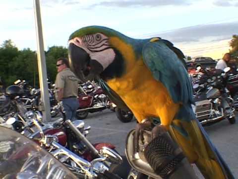 Biker Bird interview
