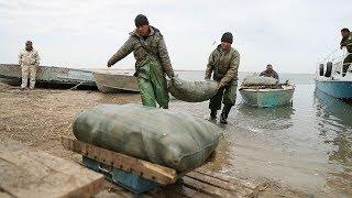 アラル海にダム、魚を戻す試み まだ最盛期の7分の1