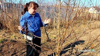 Весенняя обрезка яблони в деталях(Как правильно обрезать молодую яблоню весной, не причинив ей вреда и сохранив ее силы. Полезные советы для..., 2013-09-14T07:23:47.000Z)