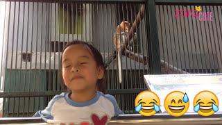 Zara wisata ke kebun binatang ragunan - ragunan zoo