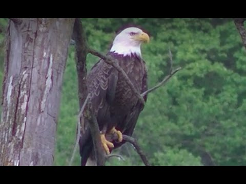 NEW ! Minnesota Outdoors, Parks, Rivers and Lakes ! Stunning Wildlife in HD !