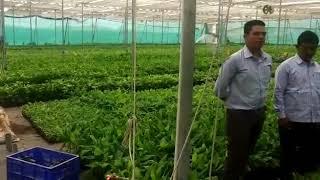 Reva flora kela tissue Barwani m.p. किसानों का अनुभव लेब विजिट के बाद का, आप सभी किसान आइये रेवा पे