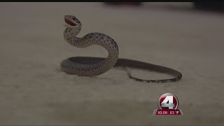 update on snake infested home