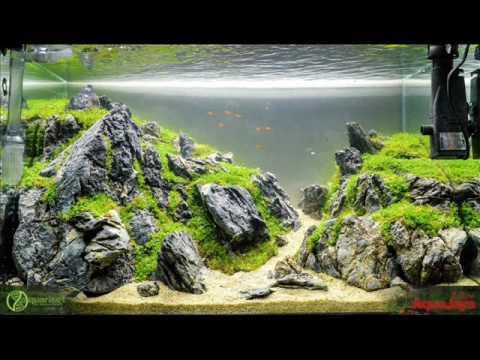 "aquascape contest 2016 "" Aquajaya Challenge "" - YouTube"