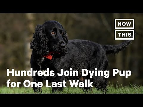 Hundreds Join Dying Pup for a Last Walk in Northern Ireland | NowThis