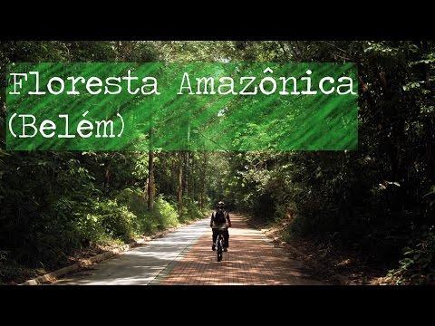 Primeira vez na Amazônia: Belém ou Manaus?