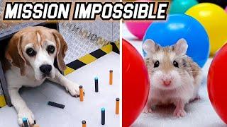 MISSION IMPOSSIBLE CHALLENGE - CAT🐱 / DOG🐶 / HAMSTER🐹 / RAT🐀 / CHINCHILLA🐭