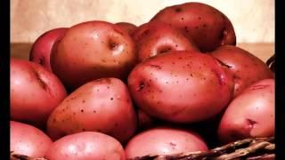 How to Plant Potato Plants