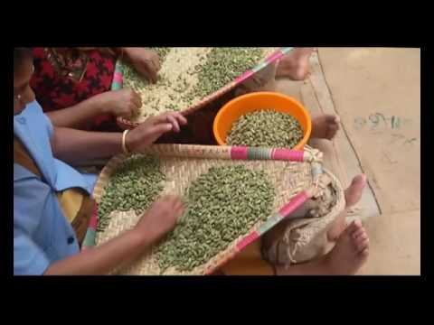 MTS Spices Cardamom Cleaning Processing
