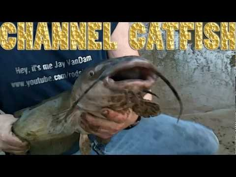 Spring Channel Catfish!!  ~The Seasonal Pattern Bite~