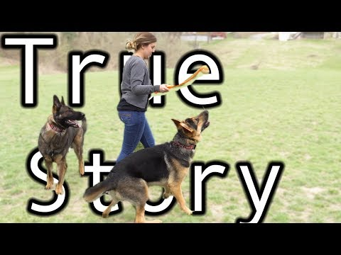 Two German Shepherds: A True Day in the Life Story.