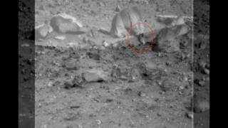 it s a living thing moving creatures on mars