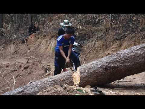 XeKong  Tat Kalang Video