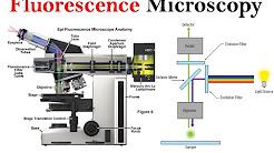 Microscopy Tutorial Fluorescence Microscopy Electron Microscopy