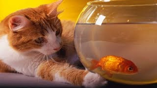 Funny CATS Videos Compilation #54
