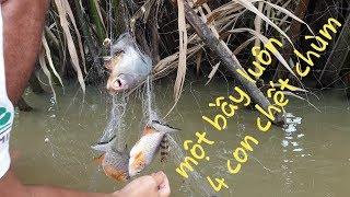 Giăng lưới sông dính luôn nguyên bầy cá chim. Mới giăng xong là dính cá