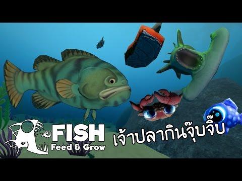 เจ้าปลากินจุ๊บจิ๊บกินของเหลือข้างทาง   Fish Feed and Grow #6