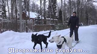 ДТ-2. Лайфхаки для владельцев собак.  Часть 2.