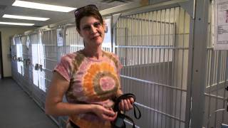 Shelter Dog Training: Cage Presence (heritage Humane Society)