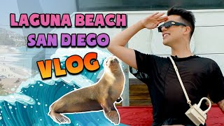 I GOT SO CLOSE TO THE SEA LIONS! LAGUNA BEACH! - SAN DIEGO VLOG