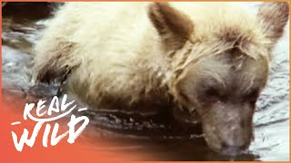 Grizzly Bear Cubs Fishing For The First Time | Wild Things