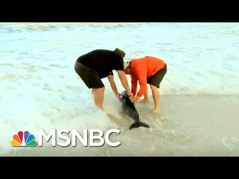 This Is Our Not-So-Old Man And The Sea. | Chris Jansing | MSNBC
