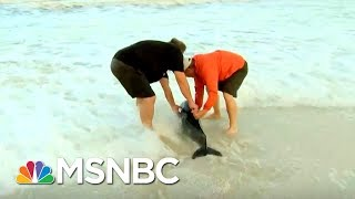 This Is Our Not-So-Old Man And The Sea.   Chris Jansing   MSNBC