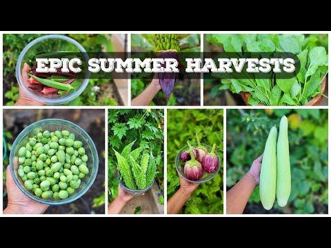 EPIC Harvests, Gardening Tips & A Lot More! – California Gardening September Garden Tour!