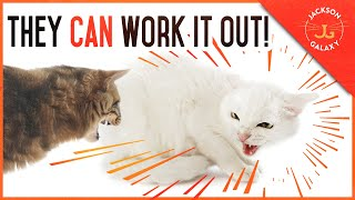 Cat Introductions Gone Wrong: They Will NOT Work it Out Without You