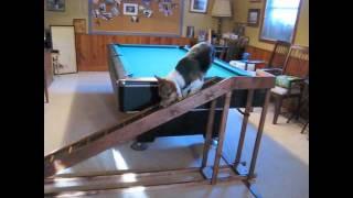 Dog Bed Ramp For Ticket.m4v