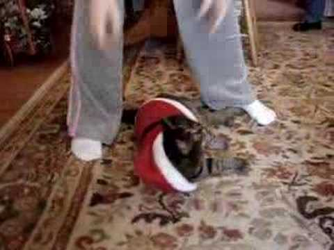 Family for Christmas - Stars Lacey Chabert and Tyron Leitso from YouTube · Duration:  31 seconds