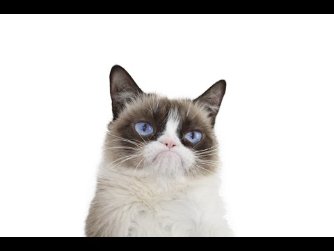 Wendy - RIP Grumpy Cat.. We Will Miss You!