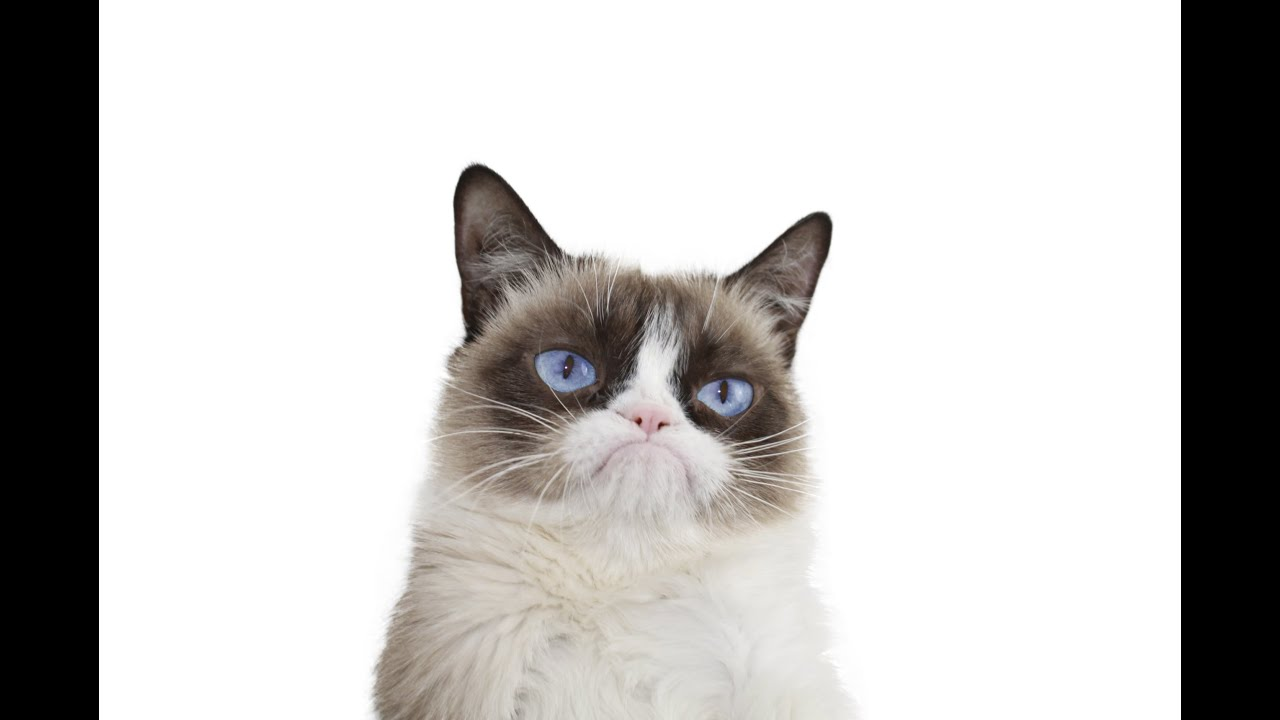 Grumpy Cat Compilation! - YouTube