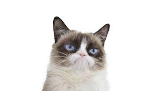 Grumpy Cat Compilation!
