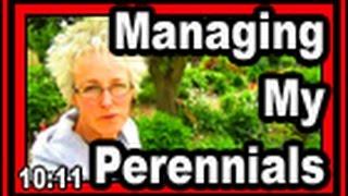 Managing My Perennials - Wisconsin Garden Video Blog 410