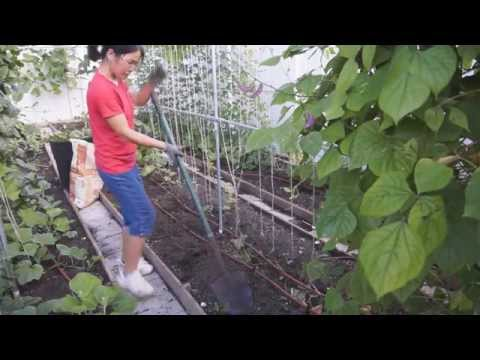 How to use fertilizers in your vegetable garden (自家菜园如何使用肥料)