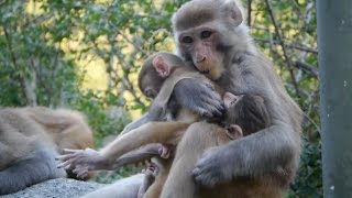 Investigative videography : The mind of a monkey baby kidnapper