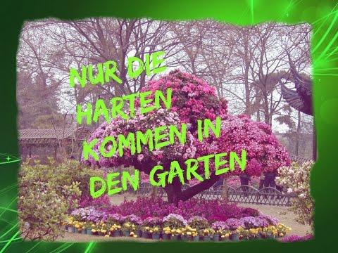 Nur Die Harten Kommen In Den Garten   Vlog 19
