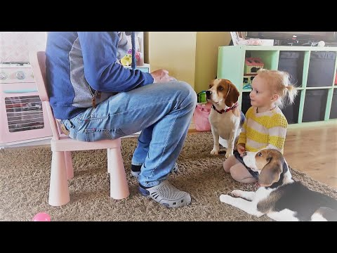 Dad trains his puppy with the help of dog and baby ( Charlie the dog)