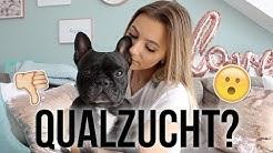 NICHT NOCHMAL! ❌ Qualzucht bei Französischen Bulldoggen | Hanna Ellen