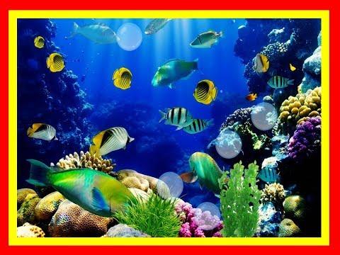 Aquarium 3D Live Wallpaper 2018|Best Android Wallpaper Apps