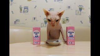 кефир кошке кисломолочные продукты кошкам. Yogurt for cats