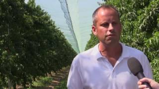 Bayer Crop Science: il pescheto sostenibile - Consorzio agrario di Ravenna