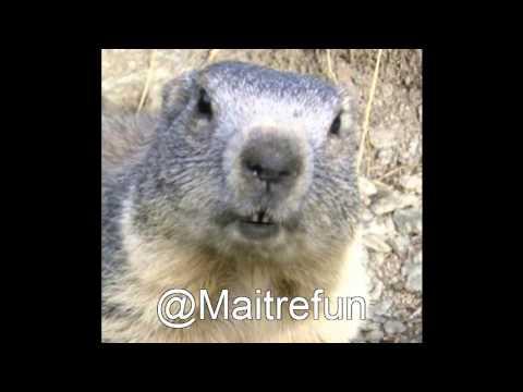 sonnerie marmotte